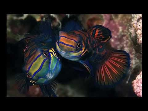 Portraits of a Coral Reef: Celebes Sea