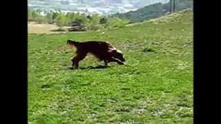 ペンション チロル から ダボスの丘で楽しく遊びました。