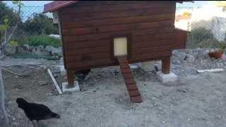 Otomatik kümes kapısı, Arduino automatic Chicken Coop Door