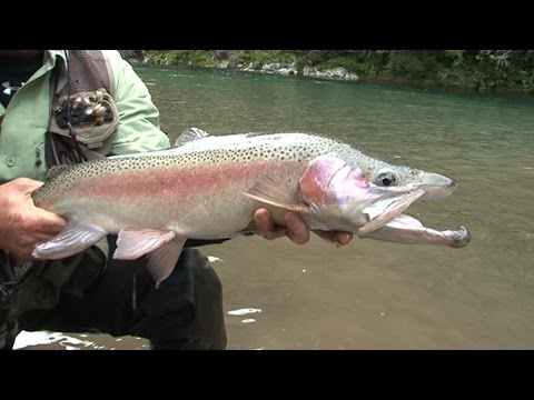 TROUT MASS-POISONED IN NEW ZEALAND