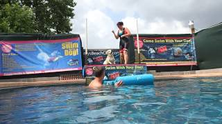 Labrador Retriever Beagle Mix Ajax Jumps On Float Before He Gets His Toy!
