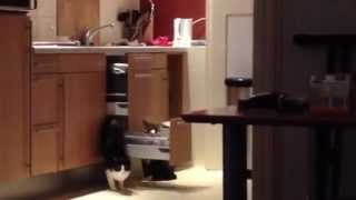 Smartest Cat in the World!!