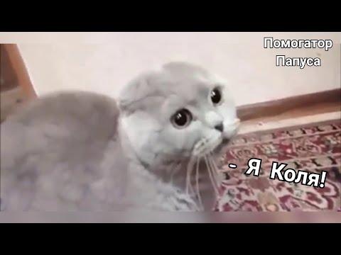 Видео как разговаривают коты
