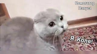 Download Говорящие коты! Лучшая подборка №11 Mp3 and Videos