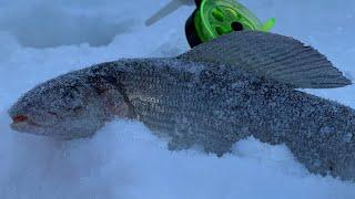 Зимняя рыбалка на хариуса Рыбалка на таежной реке в глухозимье