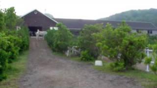 乗馬クラブ パロミノポニークラブで、数十頭の馬たちが朝の放牧にお出か...