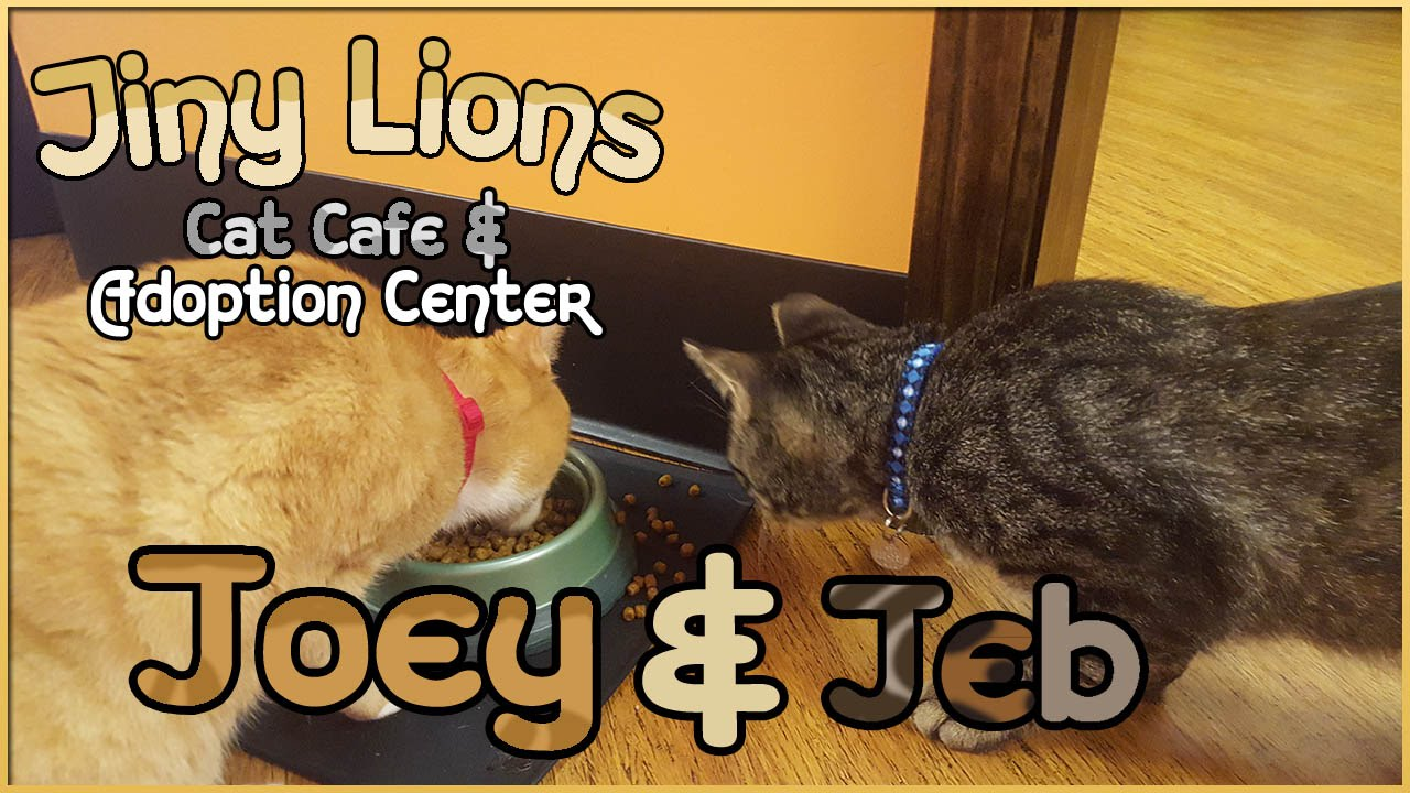 Tiny Lions Cat Cafe