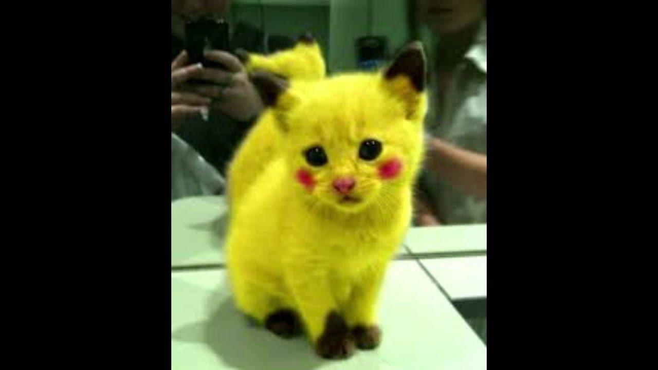 Lustige Katzen Bilder Youtube