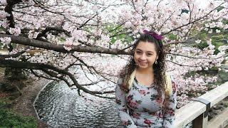 Cherry Blossoms, Ramen, and Arcade Games around Shinjuku Tokyo, Japan!