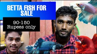 Betta fish for sale 90-150 Rupees || CHENNAI || TAMIL || Raju || Ragul || Spotlight Tamil