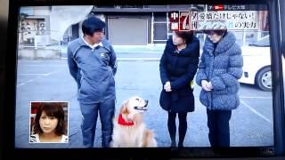 富田林の名物犬アルファがテレビ出演!