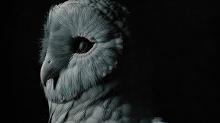 Deftones – This Place Is Death (Official Visualizer)