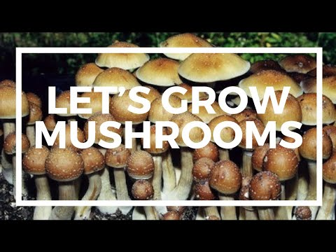 Let's Grow Mushrooms! Part One: Inoculation