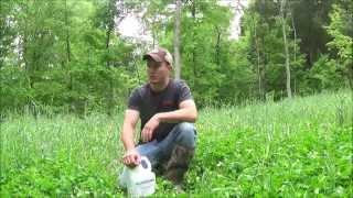 Deer Food Plots | Planting with your basic yard tools! Poor Man Food Plots