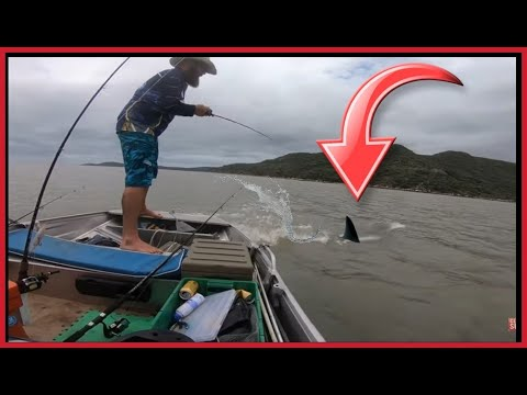 BIG SHARK!!! FISHING NORTH QUEENSLAND TROPICAL ISLAND AUSTRALIA - OYSTERS And SHARKS EVERYWHERE!!!