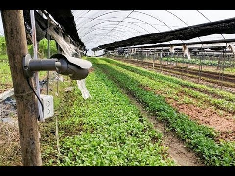 Image result for trồng rau sạch có camera