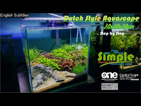 step-by-step-nano-dutch-style-aquascape-30-cm-cube