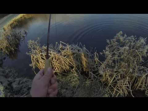 winter trout at duncton mill