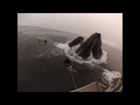 Whales Almost 'Eat' Divers In Close Encounter Off Coast Of California (VIDEO)