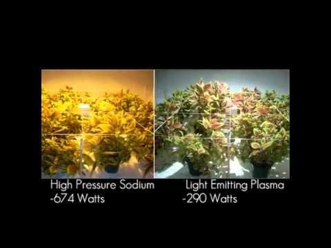 Lep Grow Light Plant Experiment