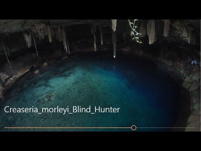 Creaseria morleyi - Blind Hunter