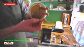 Изготовление мицелия Оценка чистоты поверхностей лаборатории, часть 1 отпечаток(Видео