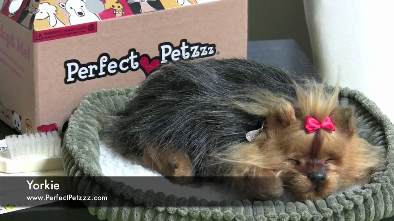 Perfect Petzzz Yorkie Youtube