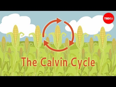 Nature's smallest factory: The Calvin cycle - Cathy Symingto