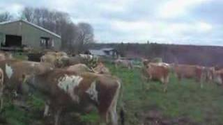 how to make a cow happy just add grass