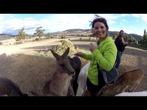 Tiffany Stamback Feeding Kangaroo In Tasmania AUS.