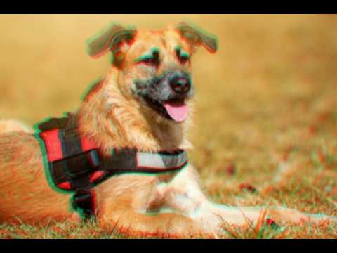 Супер-видео колаж с собаками и кошками !!! ( Классно, весело, животные, собаки, кошки)))