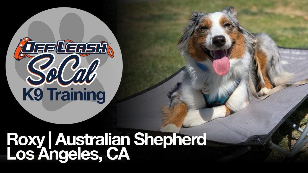 Roxy | Australian Shepherd | Los Angeles, CA