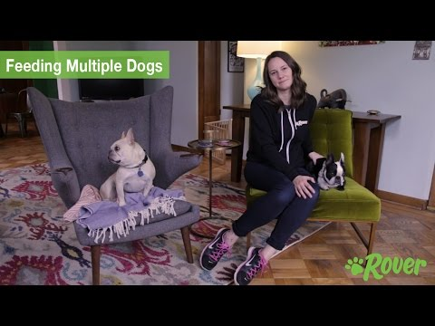 Tips for Feeding Multiple Dogs - Rover.com Quick Tips