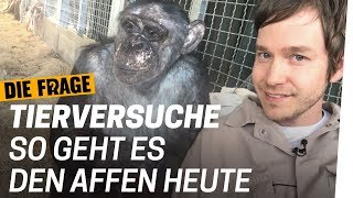 Was Tierversuche mit Affen machen | Warum lassen wir Tiere leiden? Folge 3/4