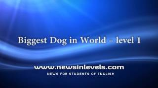 Biggest Dog in World – level 1