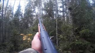 Охота на рябчиков в осеннем лесу видео