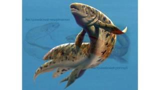 Надкласс Рыбы. Систематика