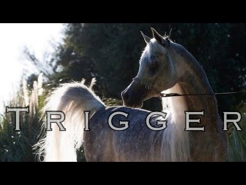 Trigger || Arabian Horse Music Video ||