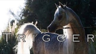 Trigger || Arabian Horse Music Video ||