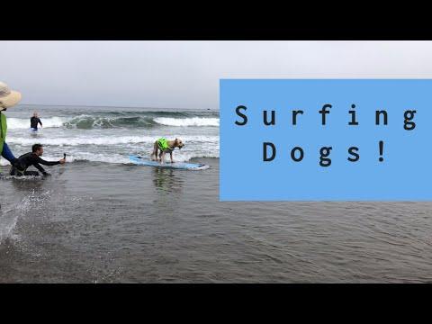 2019 World Dog Surfing Championships!