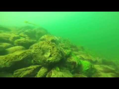Diving in Columbia River at Tri-City Washington