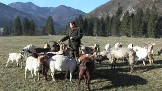 Boris Rožič na kmetiji.