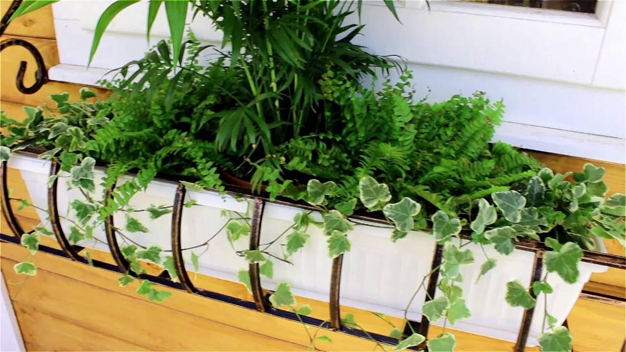 Вишни войлочная красавица в питомнике растений агросад с закрытой корневой системой оптом и в розницу, однолетние и двухлетние. Тел. (495) 551-1422.