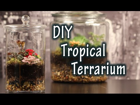 Diy Tutorial On How To Make A Terrarium For Plants In A Jar Youtube