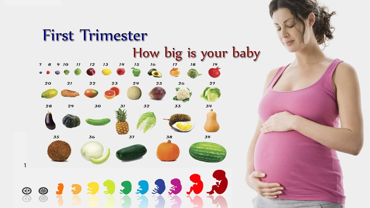 How big is your baby week by fruit comparison first trimester also rh youtube
