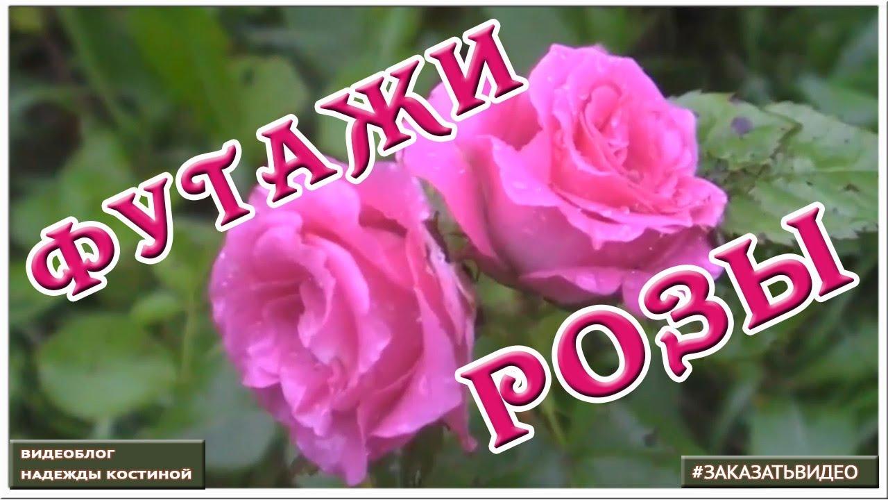 Футажи Розы