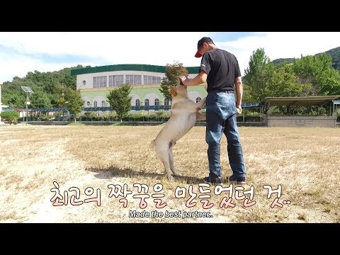 천재견에 대한 오해. 무엇이 천재견을 만드나?ㅣThe misunderstanding behind genius dogs. What makes them so smart?