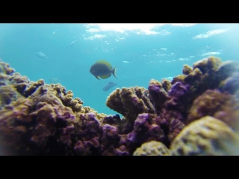 Guys lose GoPro 3 in Indonesian Reef (and find it 21 minutes later!!) HD!!