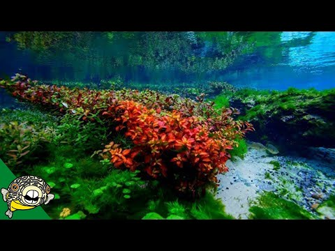Natural Aquariums - Do We Know Better? - Aquarium Co-Op