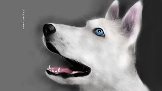 How to draw a husky dog on ipad with: Paper by fiftythree